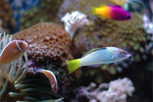 Colourful tropical fish