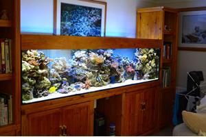 Built-in aquarium