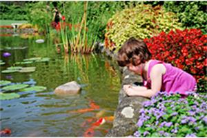 Young girl watching pond fish