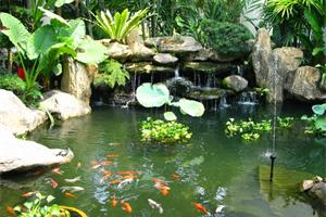 Beautifully landscaped pond