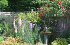 Colourful cottage garden, 2009.