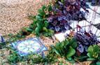 Mosaic in shady city garden.