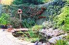 Small urban garden, 2008.