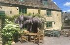 summer wisteria