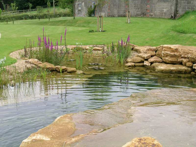 Pond with rocks and planting finished in Somerset