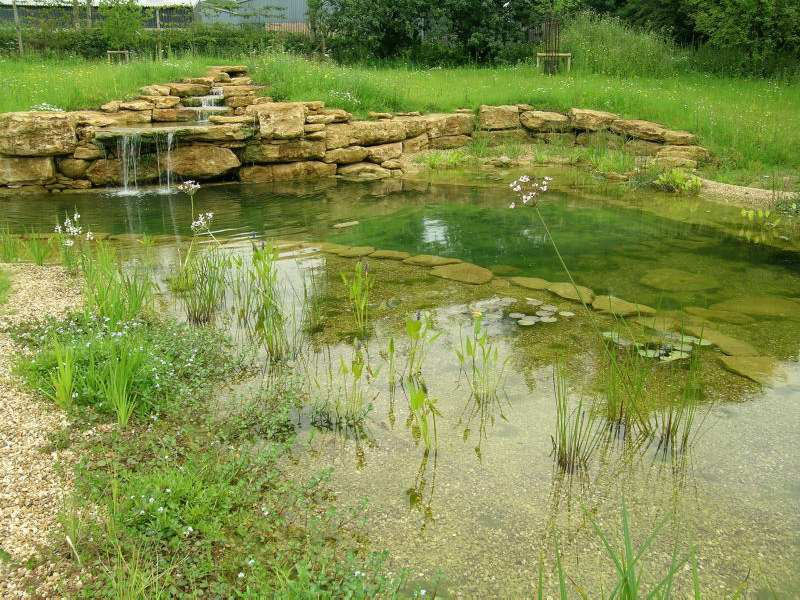 Pond and water feature in somerset