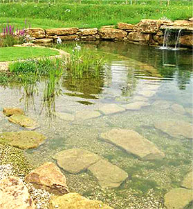 Swimming pond and waterfall feature in Somerset
