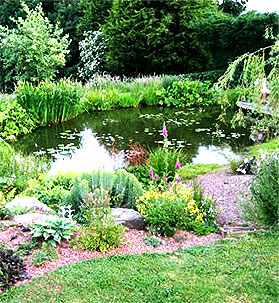 Wildlife pond with fitted liner and planting.