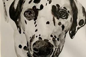 Jess's Animal portraits