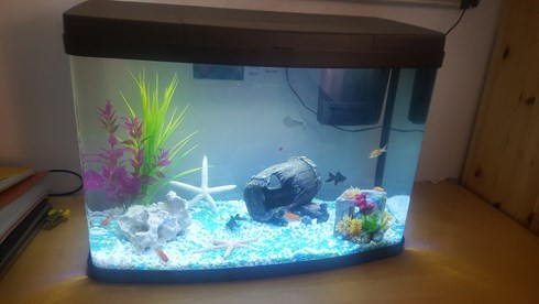 Littlestars new fish tank