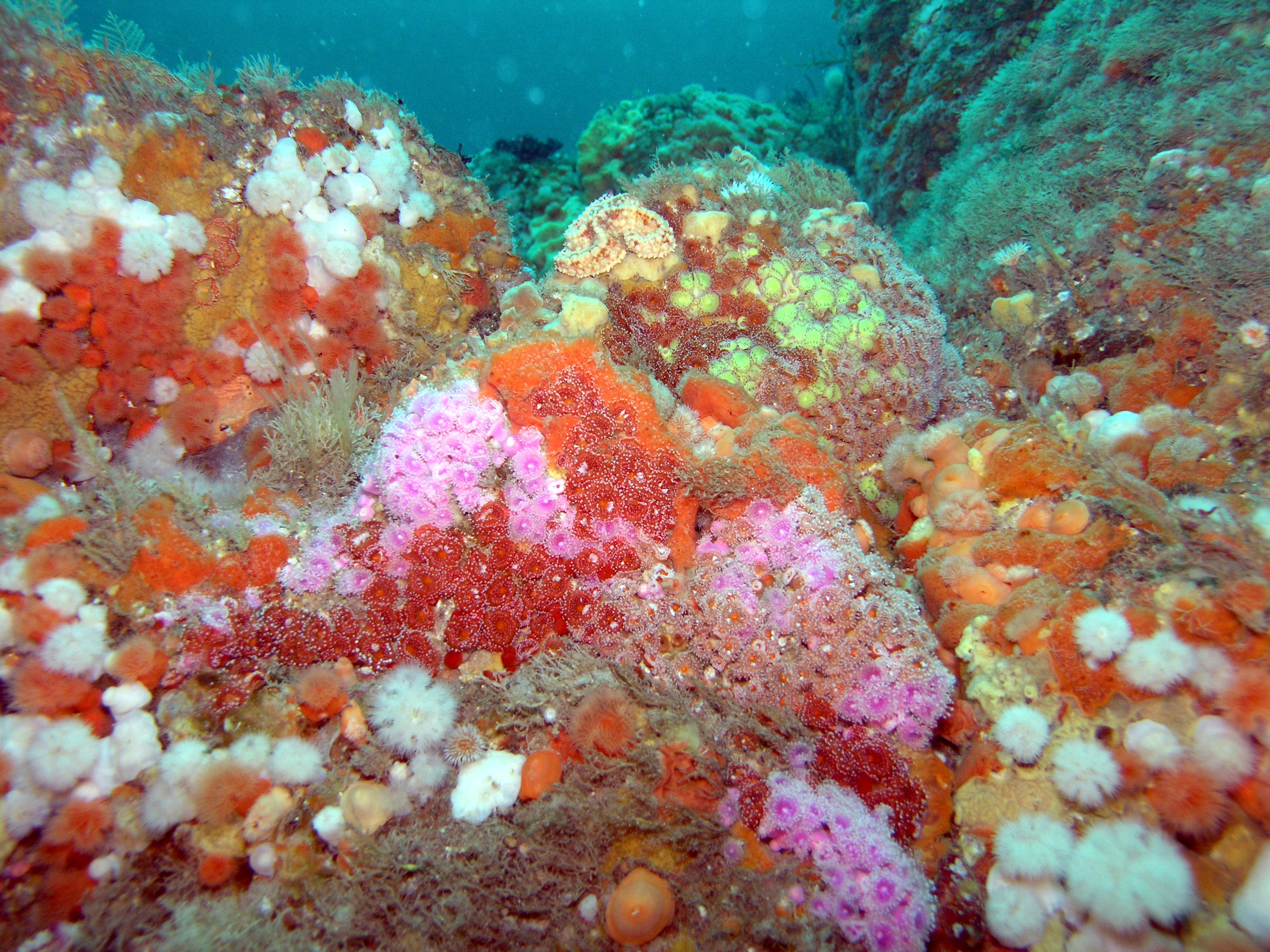 typical exposed reef