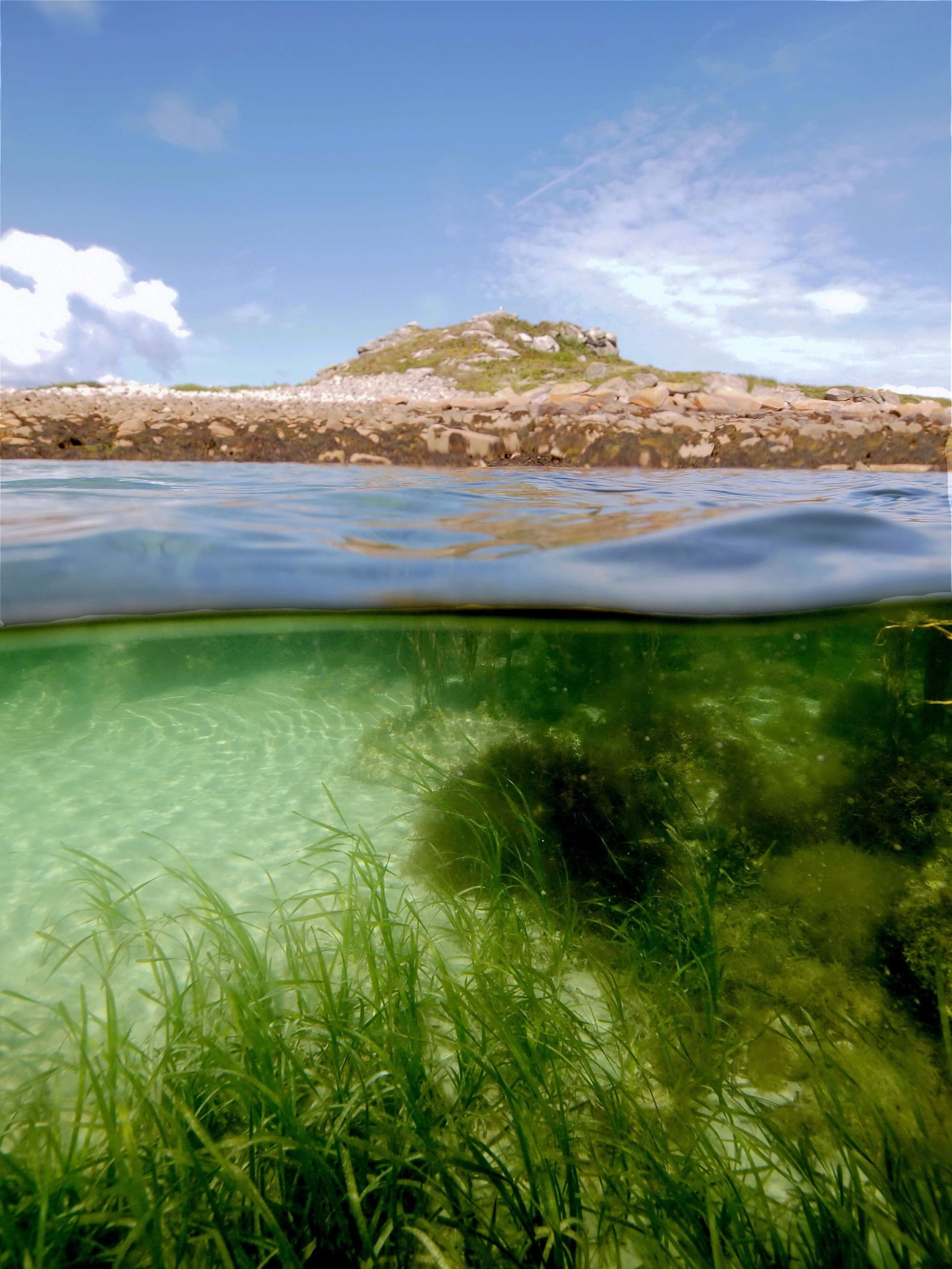 typical shallow water habitat