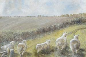 Five sheep, Suffolk. Oil on board 10in x 12in.