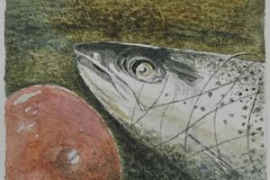 Salmon Head. Watercolour on paper 3in x 3in.