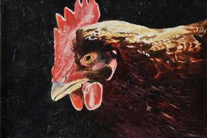 Chicken. Oil on board 5in x 7in