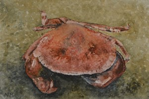 Crab. Watercolour. 4in x 6in. SOLD