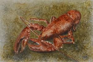 Lyme Bay lobster. Watercolour. 8in x 10in.