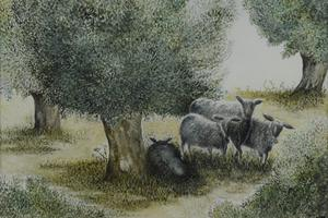 Sheep and olives, Greece. Watercolour on paper 6.25in x 9in. Not for sale.