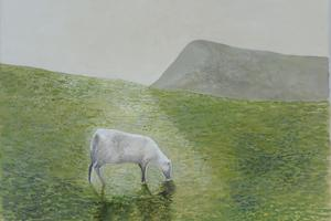 Sheep and shadow. Oil on canvas 10in x 12in SOLD