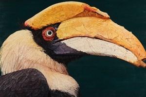 Giant Hornbill  825 x 535mm
