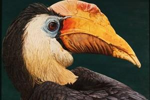 Hornbill   685 x 480mm