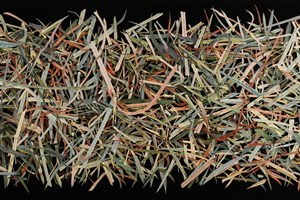 Silage Grass VI       1065 x 495mm
