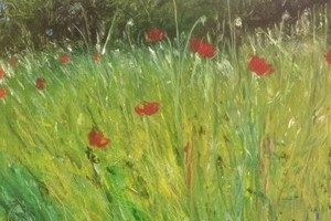 'Wild Poppies'