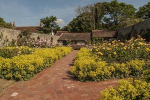 Flowers in Rottingdean Gardens