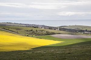 Yellow Rottingdean Rapeseed field