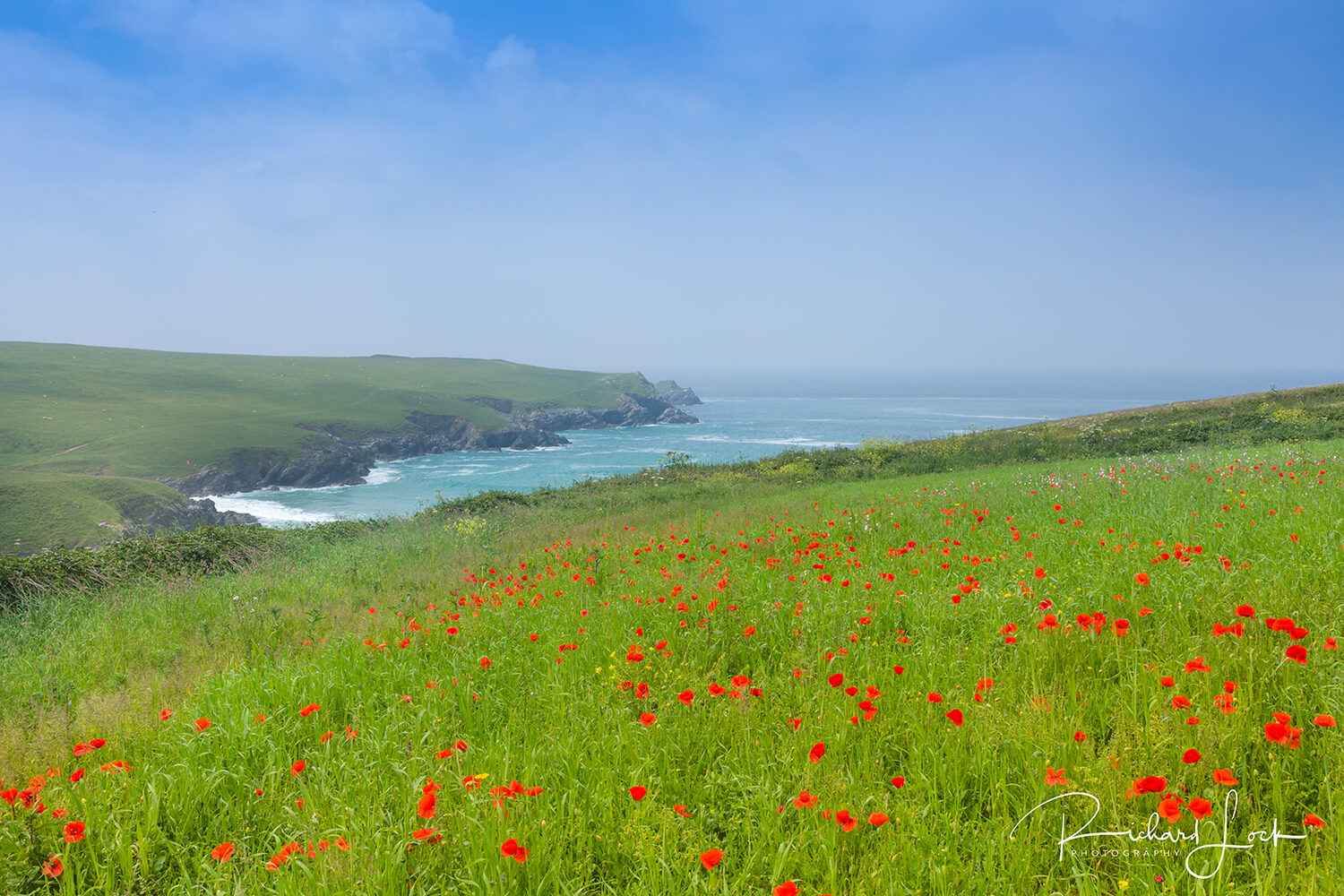 Poppies on the coast curtesy of Richard Lock Getty Images