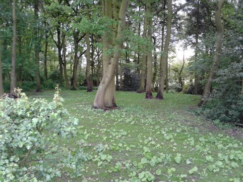 Peacefull Woodland