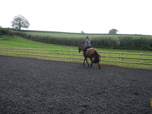 Horse and rider on an arena with rubber chipping surface