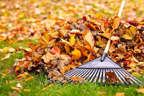 Raking Leaves Image