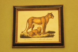 Lioness and cub.  £26.00             £78.00  Framed