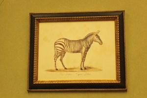 zebra  26.00.     Framed  £78.00