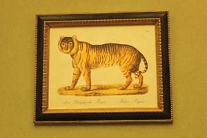 Bangladeshi Tiger  £26.00      Framed  £78.00