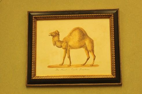 camel £26.00.          Framed  £78.00