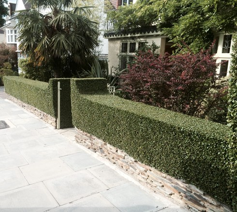 Garden Maintenance Services North London.