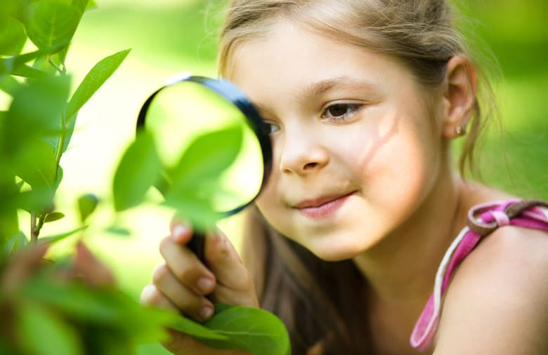 Child looking at leaves in the forest