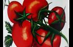 Organico Chopped Tomatoes