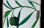 Organic Levant Sunrise Olives