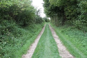 The Sunken Lane near Beaumont Hamel