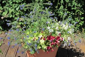 Chidham Scool June 2018 - The pollinators pot