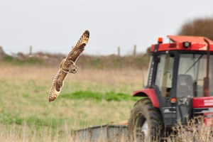 Short Eared Owl Roger Smith Xmas 2020