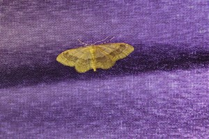 Riband Wave - North Bersted July 2021
