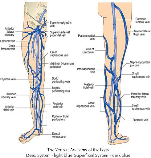 site varicose vene