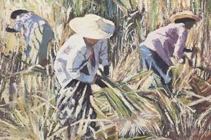 Women Harvesting Sugar Cane, Burma - oil on board - 40 x 40 cm - sold