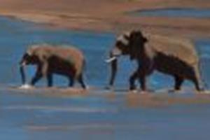 African Elephants- acrylic on board - 35 x 175 cm -sold